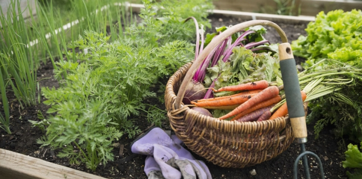 How To Grow A Kitchen Garden In Your Backyard
